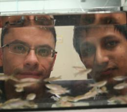 Fishy fight-or-flight response may hold answers to human nerve damage