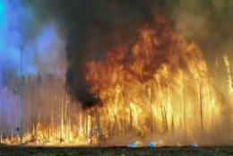 Gene-altering compounds released from forest fires
