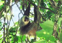 HIV's ancestors 'plagued first mammals'