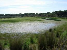 Huelva is swallowing up coastal lagoons in Doñana