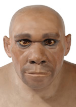Model head of a Neanderthal man.