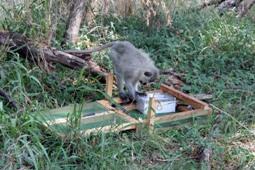 Monkey economy works