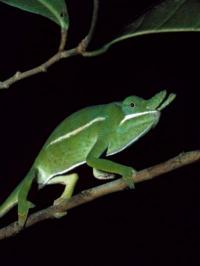 Museum specimens aid conservation effort in Madagascar