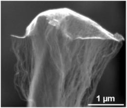 Nanotubes take flight: Sscientists use nanomaterials to grow flying carpets, 'odako' kites