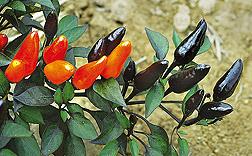 Ornamentals to Brighten the Fall Garden Palette