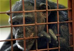 Owners struggle to find sanctuaries for chimps (AP)
