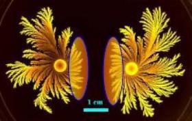Paenibacillus dendritiformis