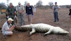 Park rangers perform an autopsy on a crocodile in South Africa's famous Kruger National Park wildlife reserve