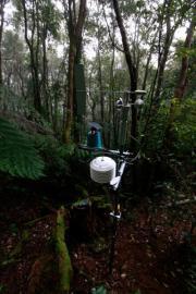 Rainforest rehab in every sense
