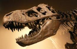 Reexamination of T. rex verifies disputed biochemical remains
