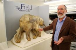 Replica of the world's best preserved wooly mammoth - a 40,000 year old baby named Lyuba