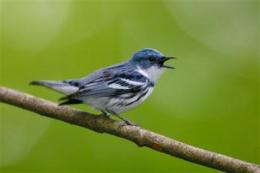 Report: Birds endangered by energy development (AP)