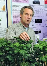 Research examines how plants produce high-energy storage organs