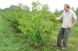 Reviving American chestnuts may mitigate climate change