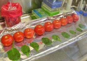 Salmonella-Contaminated Produce