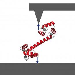 Single-molecule technique captures calcium sensor calmodulin in action