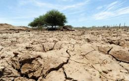 Some 6,000 families were affected by the drought in the Chaco region of Paraguay, particularly indigenous populations