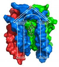 Structural biology scores with protein snapshot