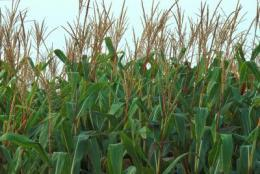 Study highlights massive imbalances in global fertilizer use