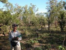 Study shows effect of feral buffalo on Kakadu