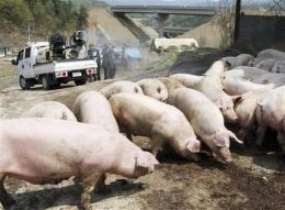 Swine flu prompts EU warning on travel to US (AP)