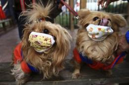 Swine flu toll includes a few pets (AP)