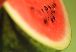 Tracking Virus Resistance Genes in Watermelon Made Easier