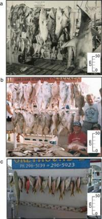 Trophy Fish Caught on Key West Charter Boats