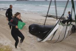 Two of the whales were already dead and the rest were in such poor condition they would need to be put down
