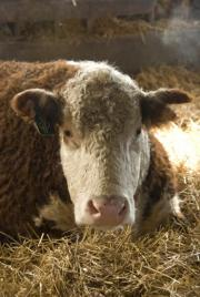 US shorts critical farm animal research, scientists say