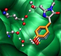 Vibrations key to efficiency of green fluorescent protein