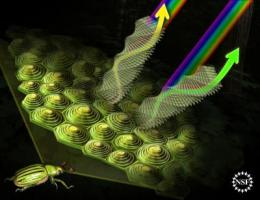 What scientists know about jewel beetle shimmer