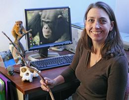 Wild chimps have near human understanding of fire, says study