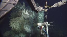 Explore underwater volcanoes, seafloor hot springs and methane ice