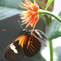 How the butterflies got their spots