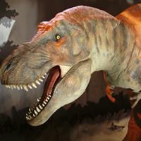 Tyrannosaurus rex , T rex