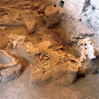 Pompeii's mystery horse revealed