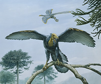 Archaeopteryx and the dinosaur-bird family tree