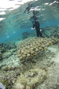 Chemical warfare on the reef: How certain seaweed species harm corals