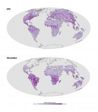 First-of-its-kind fluorescence map offers a new view of the world's land plants