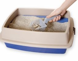 Green cats eye up new kitty litter developed by Imperial researchers