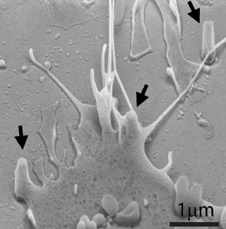 Nanopillars yield more precise molecular photography