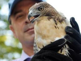 New York City Parks and Recreation Commissioner Adrian Benepe hold a red-tailed hawk