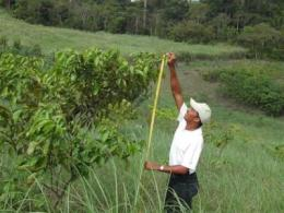 Reforestation research in Latin America helps build better forests