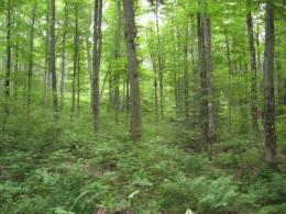 Research maps out trade-offs between deer and timber