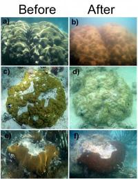 Study: Severe low temperatures devastate coral reefs in Florida Keys