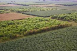 Switch from corn to grass would raise ethanol output, cut emissions