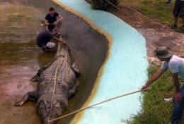 The crocodile was measured at 6.2 metres (20 feet and four inches)