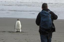 The Emperor penguin, nicknamed