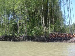 Mapping mangrove biomass